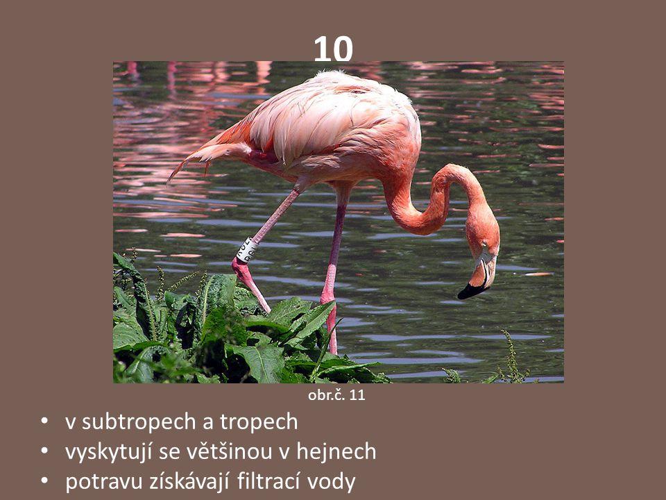 10 v subtropech a tropech vyskytují se většinou v hejnech potravu získávají filtrací vody obr.č. 11