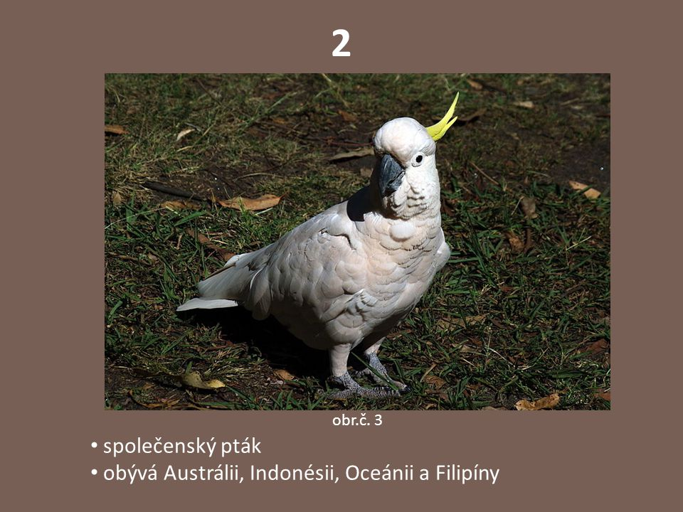 2 obr.č. 3 společenský pták obývá Austrálii, Indonésii, Oceánii a Filipíny