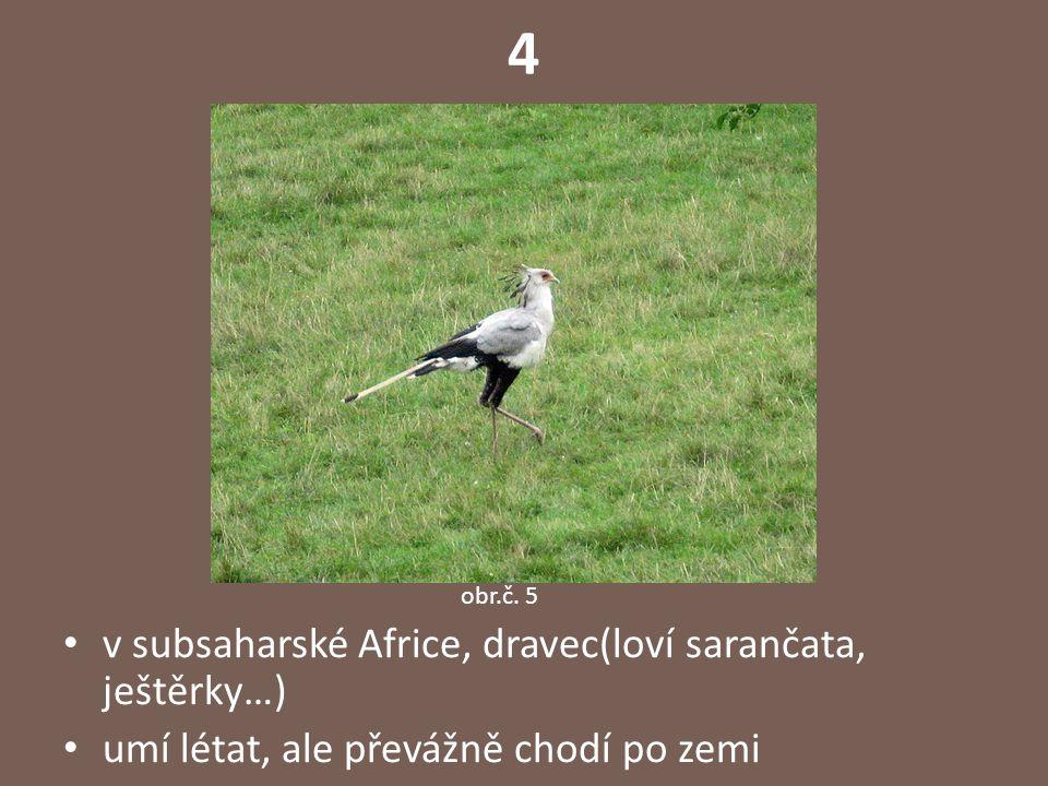 4 v subsaharské Africe, dravec(loví sarančata, ještěrky…) umí létat, ale převážně chodí po zemi obr.č.
