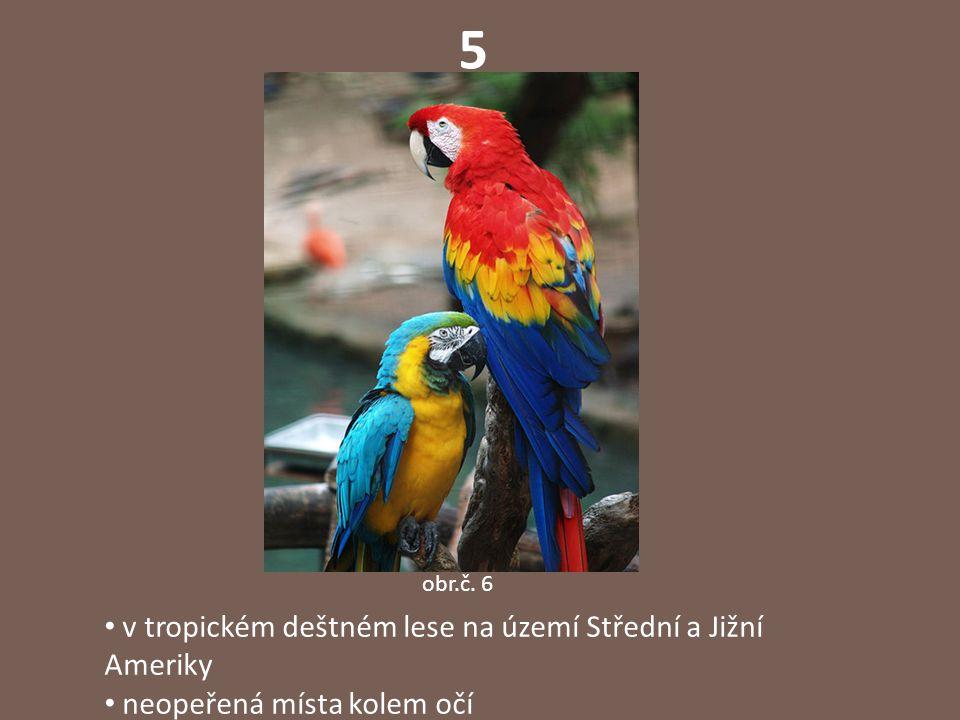 5 obr.č. 6 v tropickém deštném lese na území Střední a Jižní Ameriky neopeřená místa kolem očí