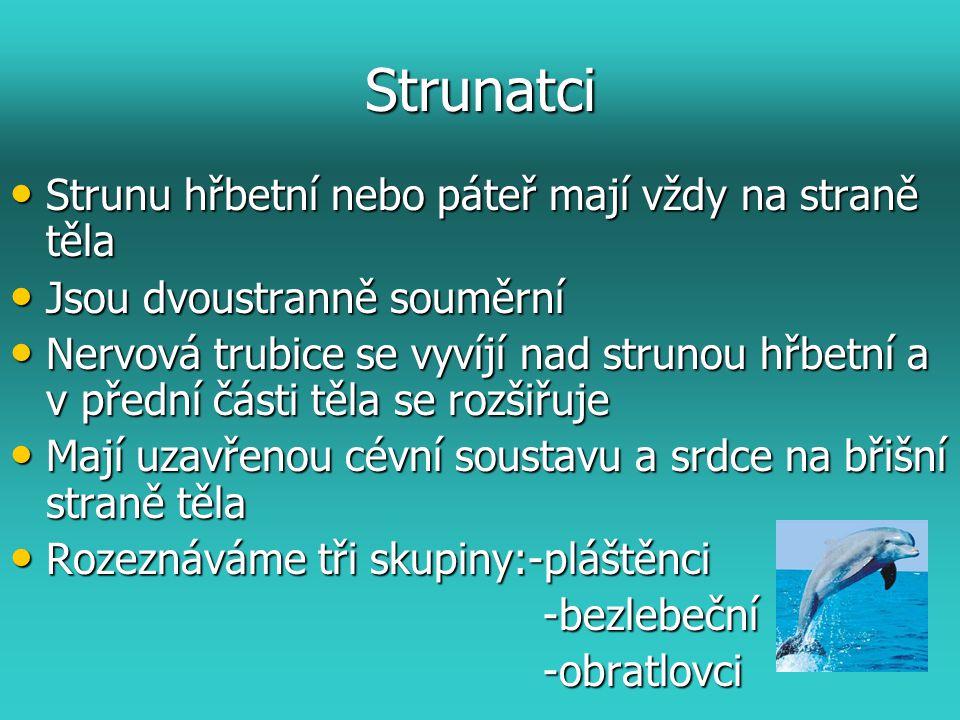 Strunatci Strunu hřbetní nebo páteř mají vždy na straně těla Strunu hřbetní nebo páteř mají vždy na straně těla Jsou dvoustranně souměrní Jsou dvoustr