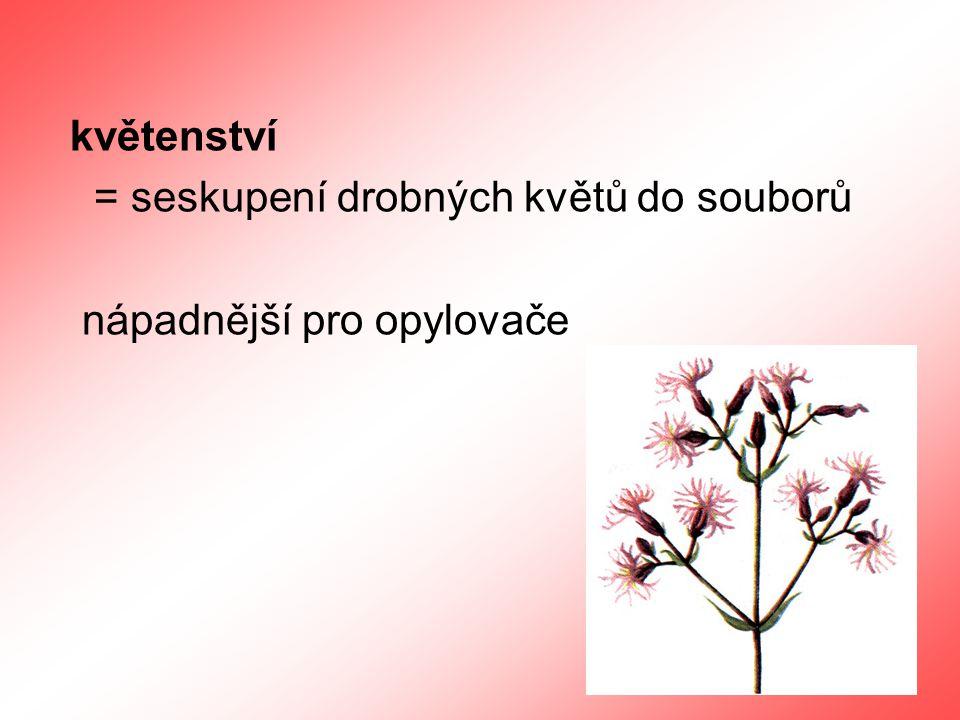 druhy květenství 1.