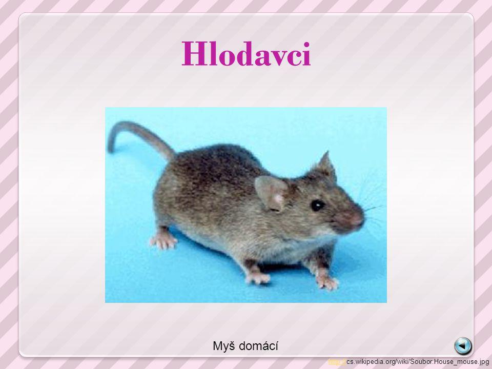 Hlodavci http://http://cs.wikipedia.org/wiki/Soubor:House_mouse.jpg Myš domácí
