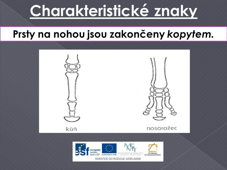 Charakteristické znaky Prsty na nohou jsou zakončeny kopytem.