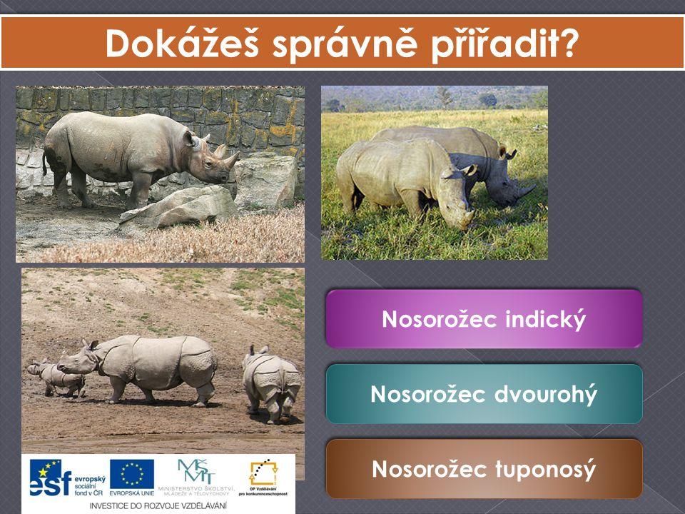 Dokážeš správně přiřadit? Nosorožec indický Nosorožec dvourohý Nosorožec tuponosý
