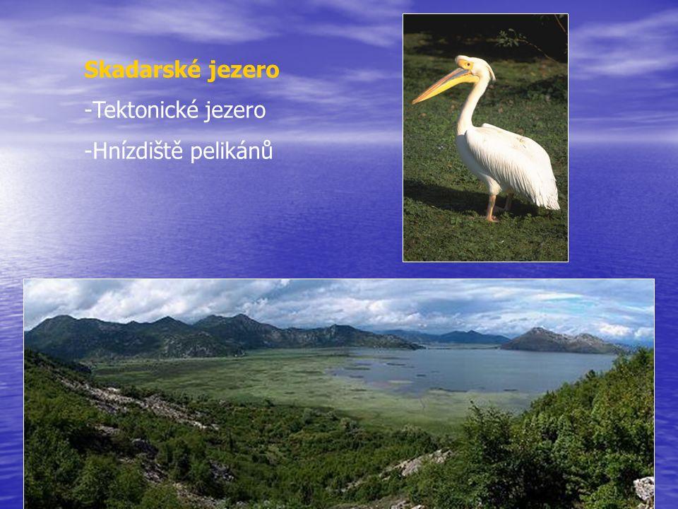 Skadarské jezero -Tektonické jezero -Hnízdiště pelikánů