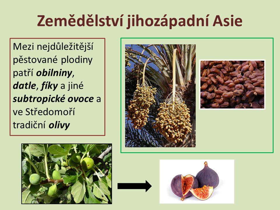 Zemědělství jihozápadní Asie Mezi nejdůležitější pěstované plodiny patří obilniny, datle, fíky a jiné subtropické ovoce a ve Středomoří tradiční olivy