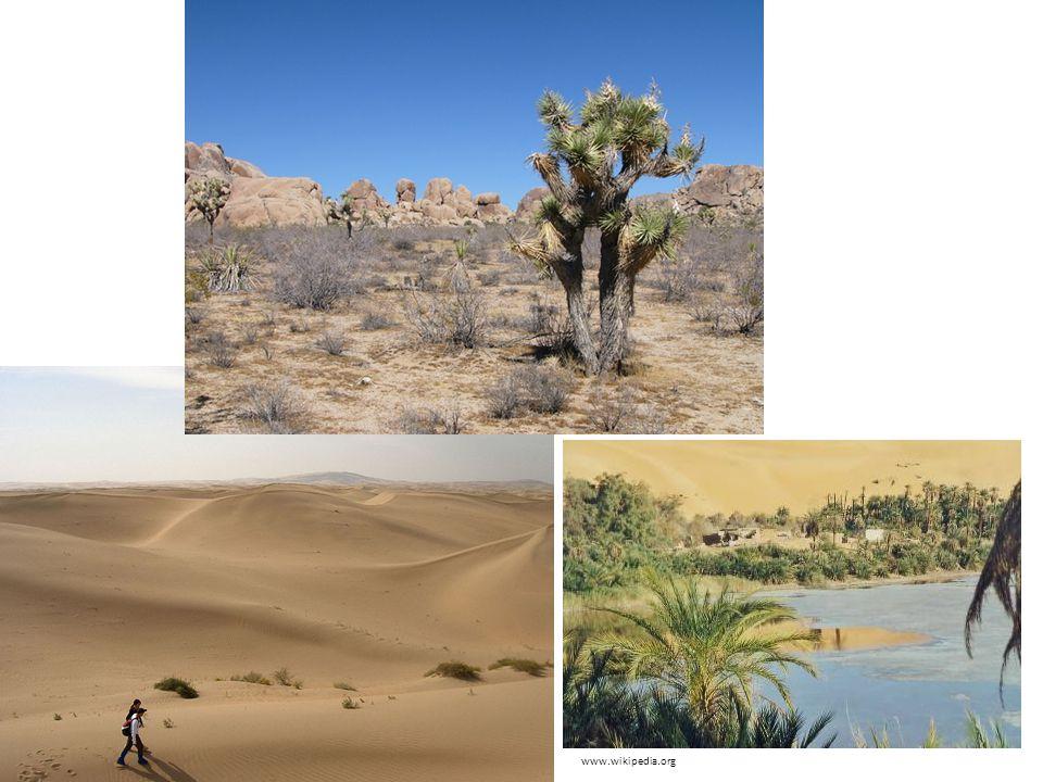 Rostliny kaktusy, datlovníky, palmy …