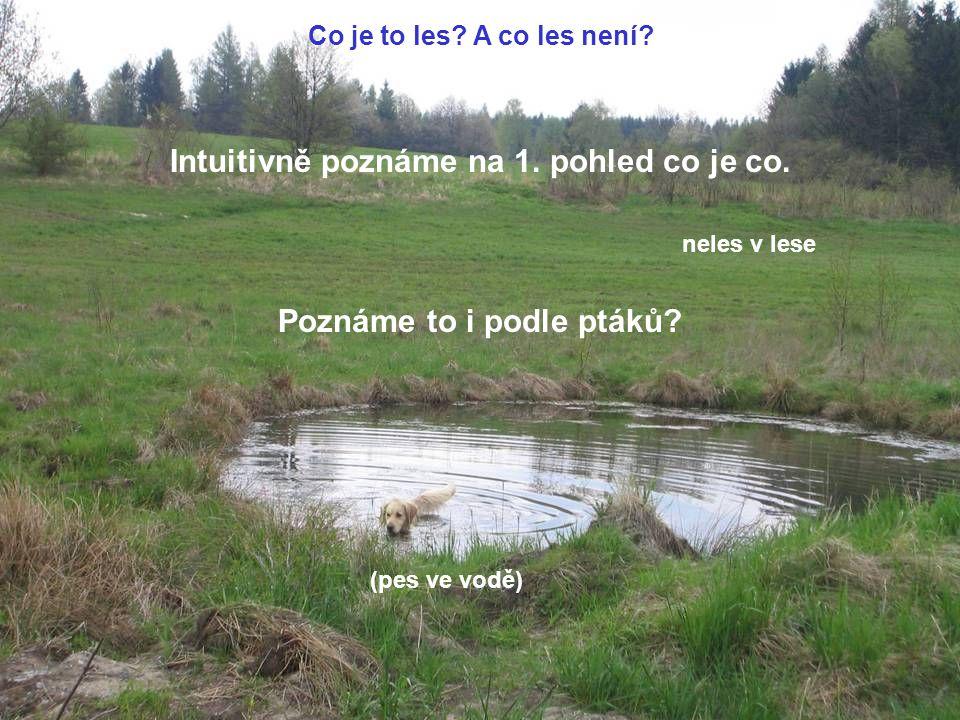(pes ve vodě) neles v lese Intuitivně poznáme na 1. pohled co je co. Co je to les? A co les není? Poznáme to i podle ptáků?