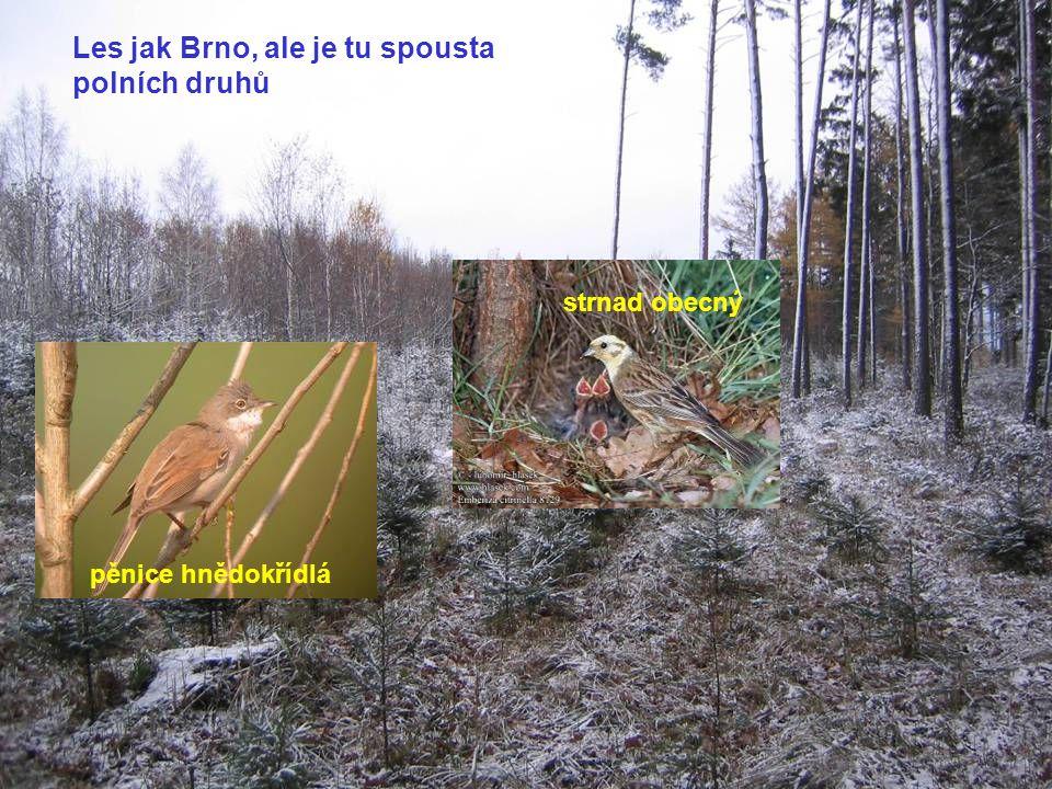 cvrčilka říční drozd zpěvný Předbělokarpatský nivňák