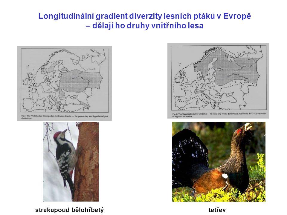Longitudinální gradient diverzity lesních ptáků v Evropě – dělají ho druhy vnitřního lesa tetřev strakapoud bělohřbetý