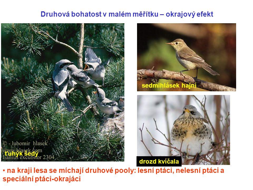 Druhová bohatost v malém měřítku – okrajový efekt na kraji lesa se míchají druhové pooly: lesní ptáci, nelesní ptáci a speciální ptáci-okrajáci ťuhýk