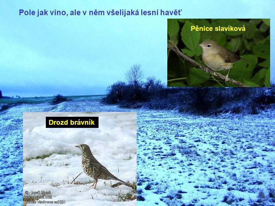 Ptáci čtou prostředí jinak než my.