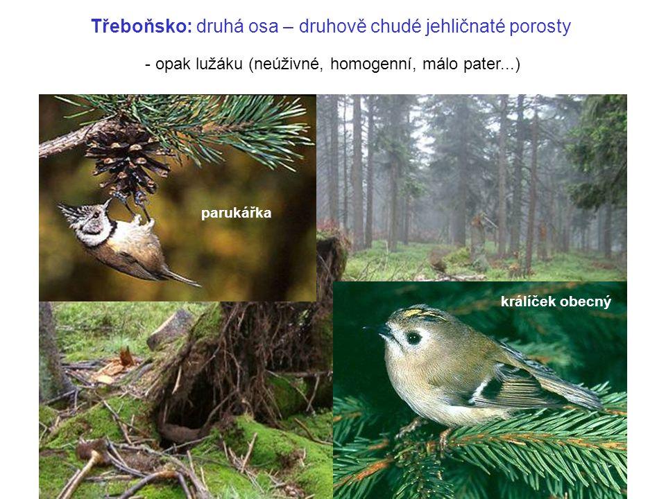 parukářka králíček obecný Třeboňsko: druhá osa – druhově chudé jehličnaté porosty - opak lužáku (neúživné, homogenní, málo pater...)