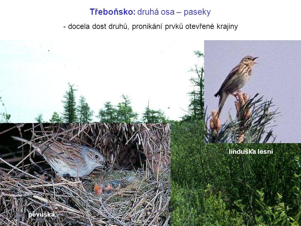 pěvuška linduška lesní Třeboňsko: druhá osa – paseky - docela dost druhů, pronikání prvků otevřené krajiny