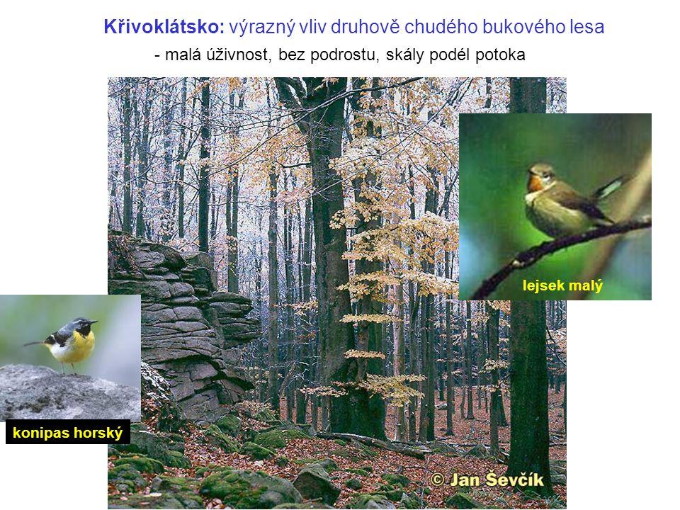 Křivoklátsko: výrazný vliv druhově chudého bukového lesa - malá úživnost, bez podrostu, skály podél potoka lejsek malý konipas horský