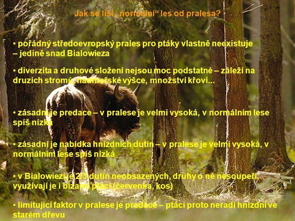 """Jak se liší """"normální"""" les od pralesa? pořádný středoevropský prales pro ptáky vlastně neexistuje – jedině snad Bialowieza diverzita a druhové složení"""
