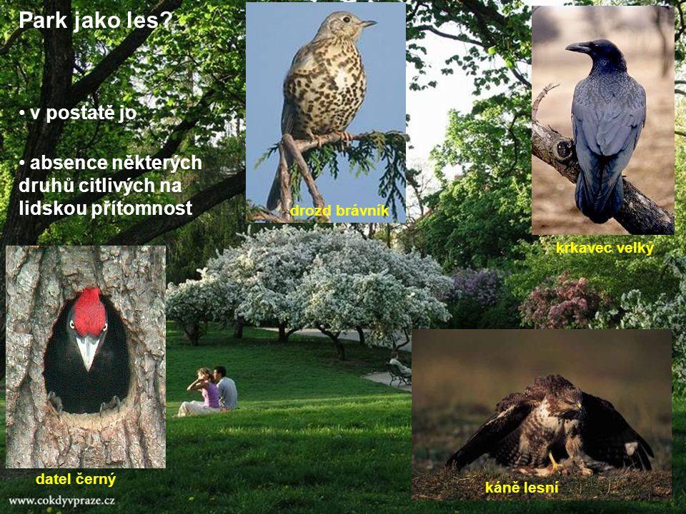 Park jako les? v postatě jo absence některých druhů citlivých na lidskou přítomnost káně lesní datel černý drozd brávník krkavec velký