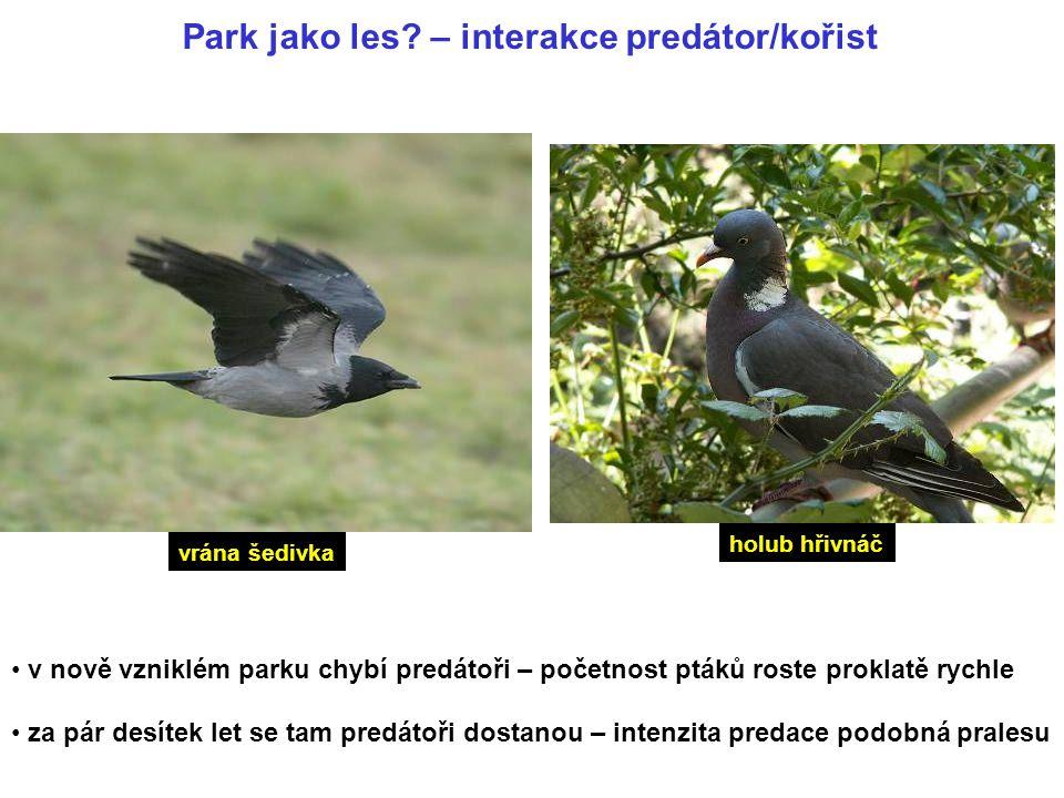 Park jako les? – interakce predátor/kořist v nově vzniklém parku chybí predátoři – početnost ptáků roste proklatě rychle za pár desítek let se tam pre