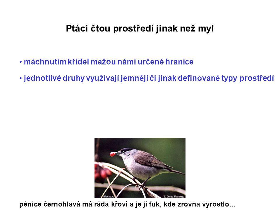 Ptáci čtou prostředí jinak než my! máchnutím křídel mažou námi určené hranice jednotlivé druhy využívají jemněji či jinak definované typy prostředí pě