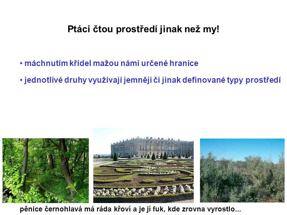Potravní specializace (všichni lesní ptáci ČR n=87) Křivka Jeřábek Sluka sýc rousný