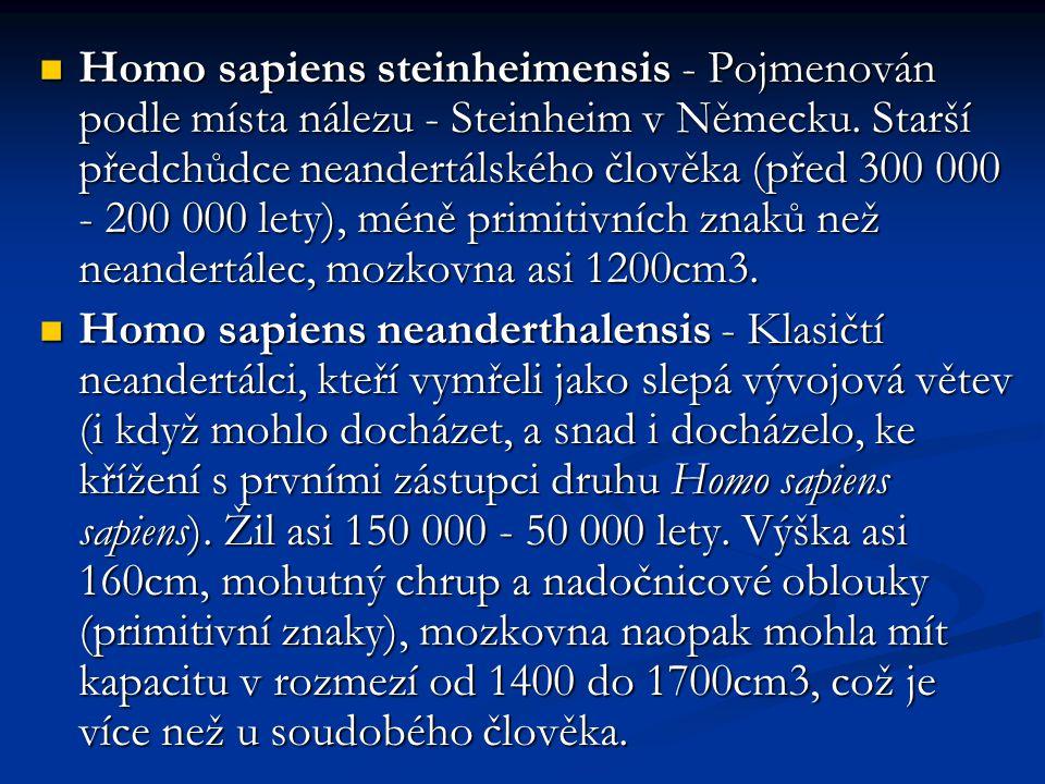 Homo sapiens steinheimensis - Pojmenován podle místa nálezu - Steinheim v Německu. Starší předchůdce neandertálského člověka (před 300 000 - 200 000 l