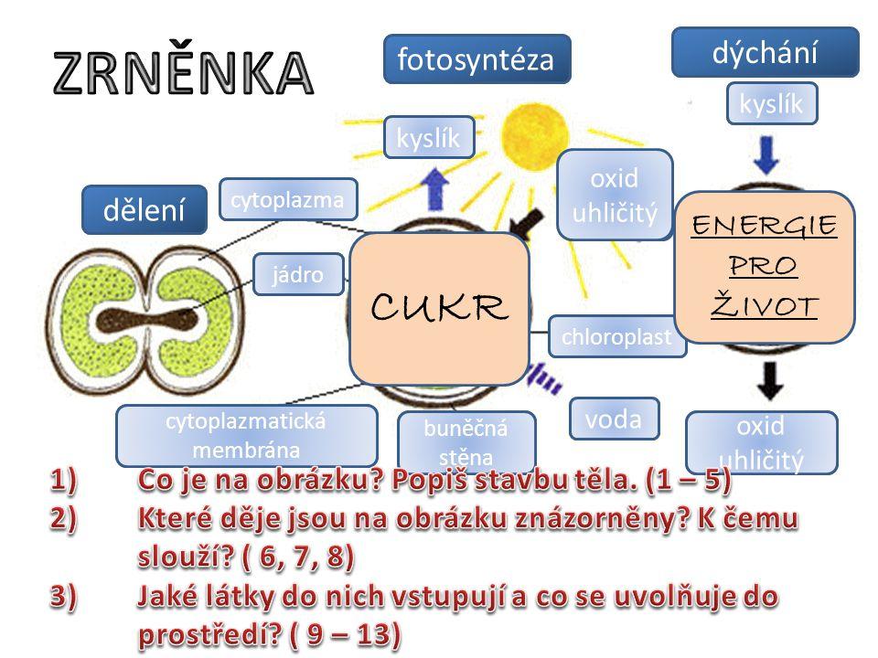 4 3 13 9 10 5 1 2 12 11 6 8 7 dělení fotosyntéza dýchání kyslík oxid uhličitý kyslík cytoplazma jádro cytoplazmatická membrána buněčná stěna voda chlo