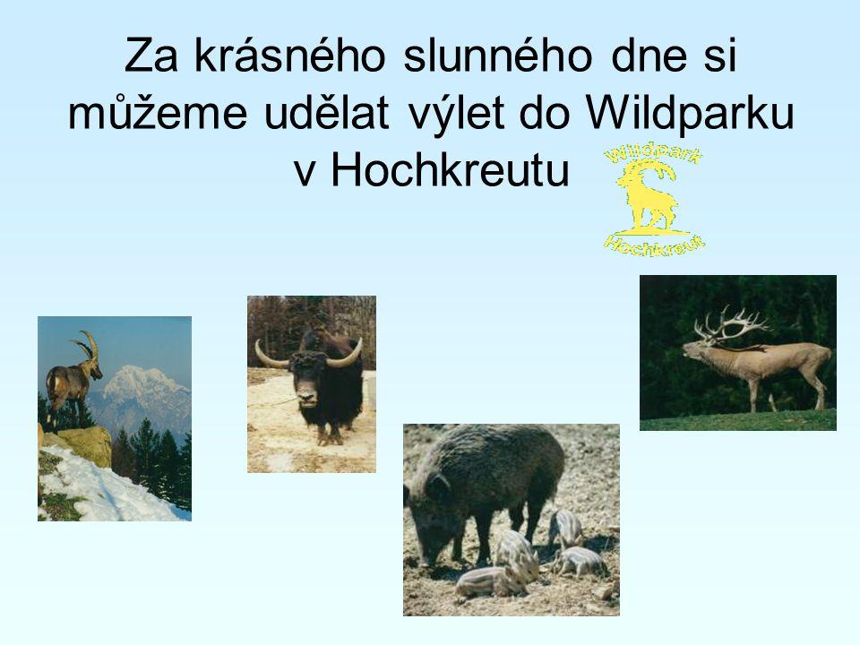 Za krásného slunného dne si můžeme udělat výlet do Wildparku v Hochkreutu