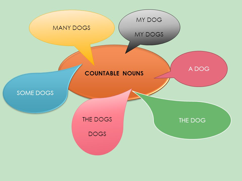 COUNTABLE NOUNS THE DOG SOME DOGS A DOG THE DOGS DOGS MANY DOGS MY DOG MY DOGS