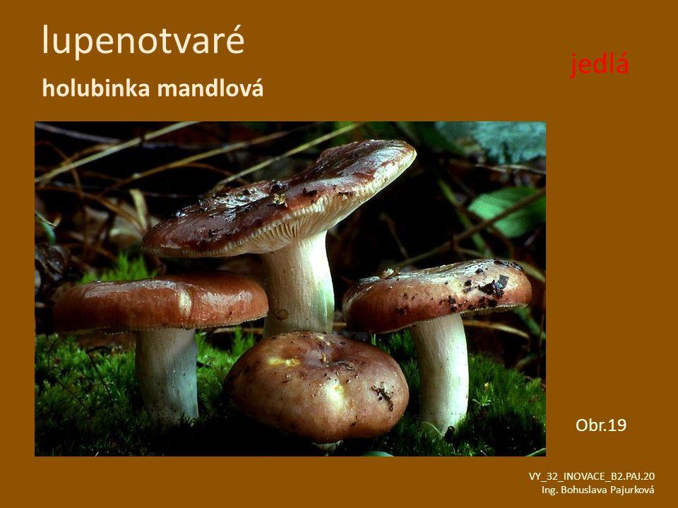lupenotvaré holubinka mandlová VY_32_INOVACE_B2.PAJ.20 Ing. Bohuslava Pajurková Obr.19 jedlá