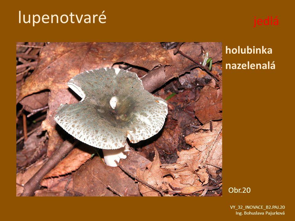 lupenotvaré holubinka nazelenalá VY_32_INOVACE_B2.PAJ.20 Ing. Bohuslava Pajurková Obr.20