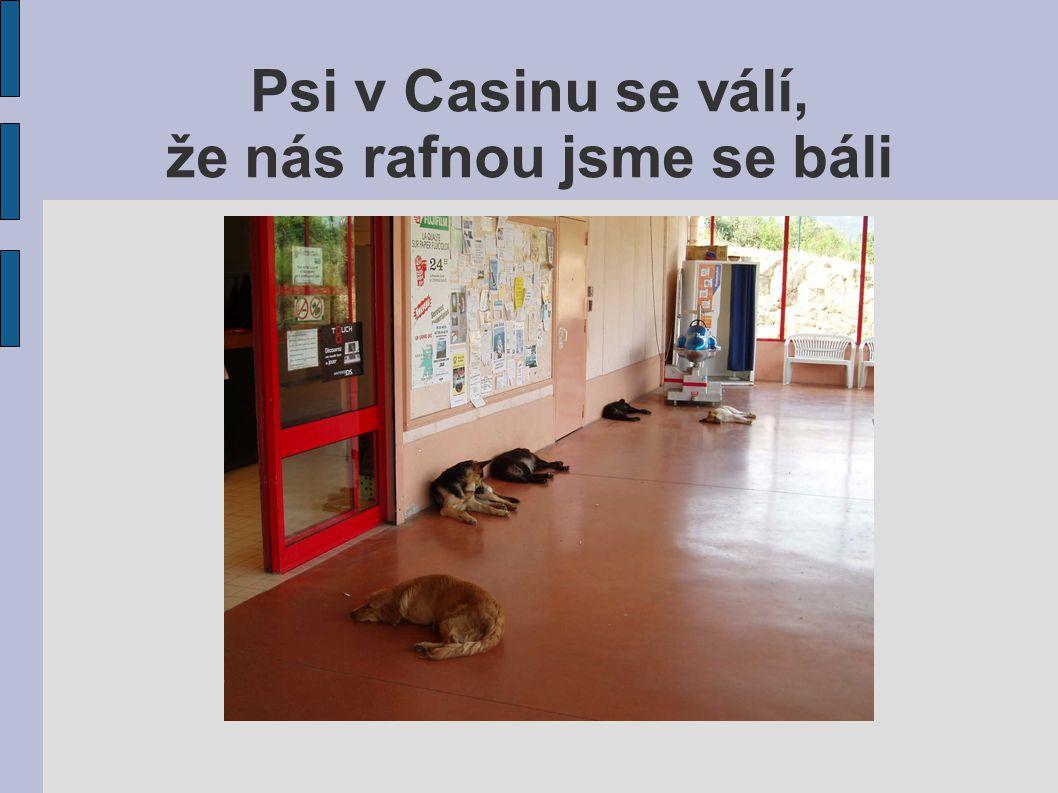 Psi v Casinu se válí, že nás rafnou jsme se báli