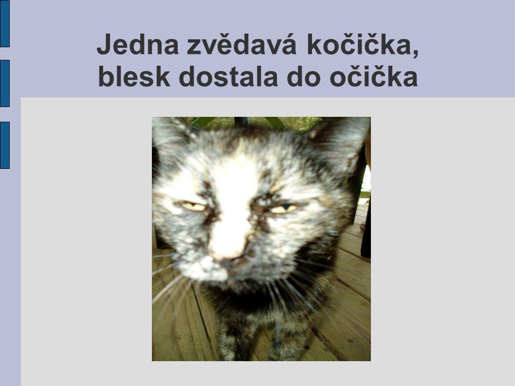 Jedna zvědavá kočička, blesk dostala do očička