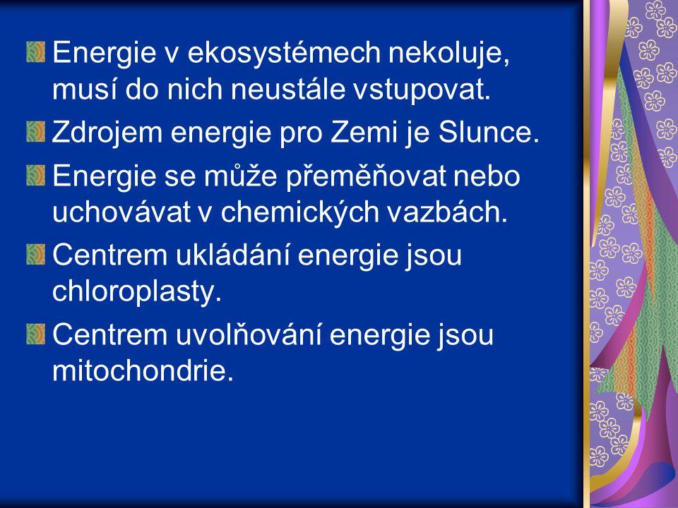 Energie v ekosystémech nekoluje, musí do nich neustále vstupovat. Zdrojem energie pro Zemi je Slunce. Energie se může přeměňovat nebo uchovávat v chem