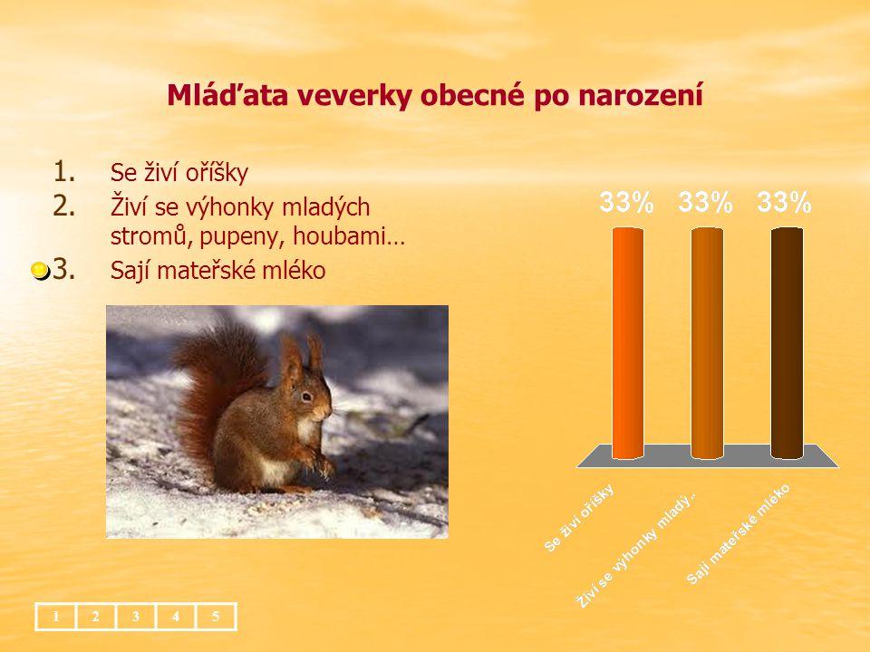 Mláďata veverky obecné po narození 1. 1. Se živí oříšky 2. 2. Živí se výhonky mladých stromů, pupeny, houbami… 3. 3. Sají mateřské mléko 12345