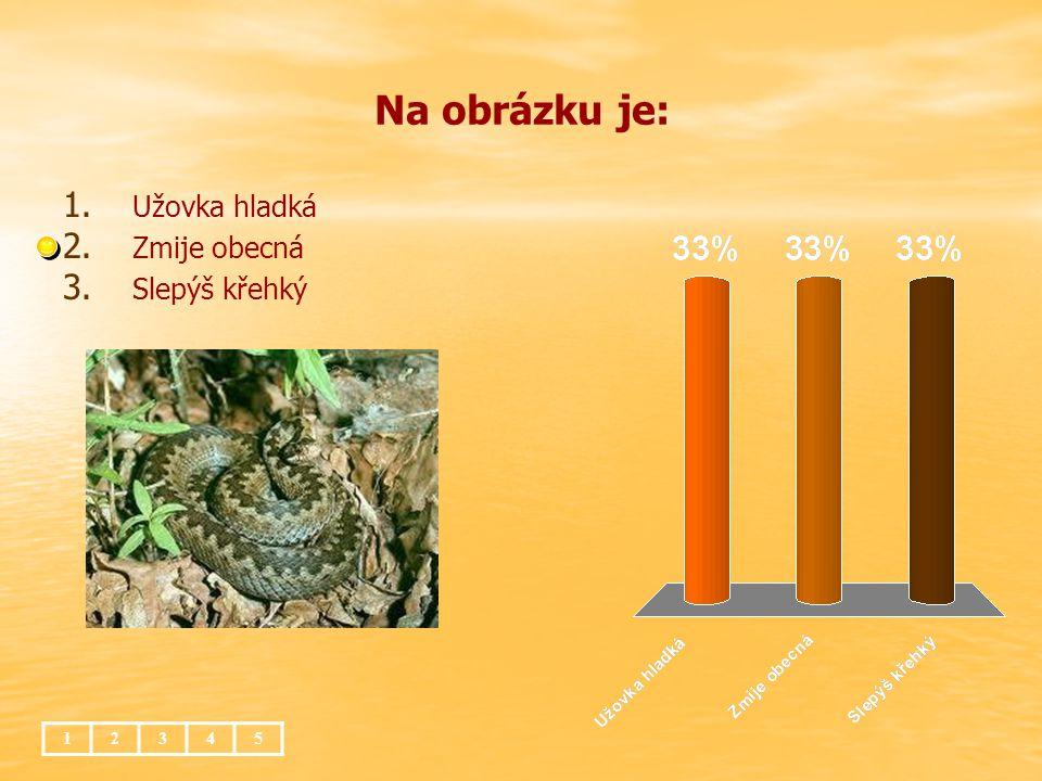 Huňatý ocas má veverka obecná 1.1. pomáhá jí udržovat rovnováhu při skocích 2.