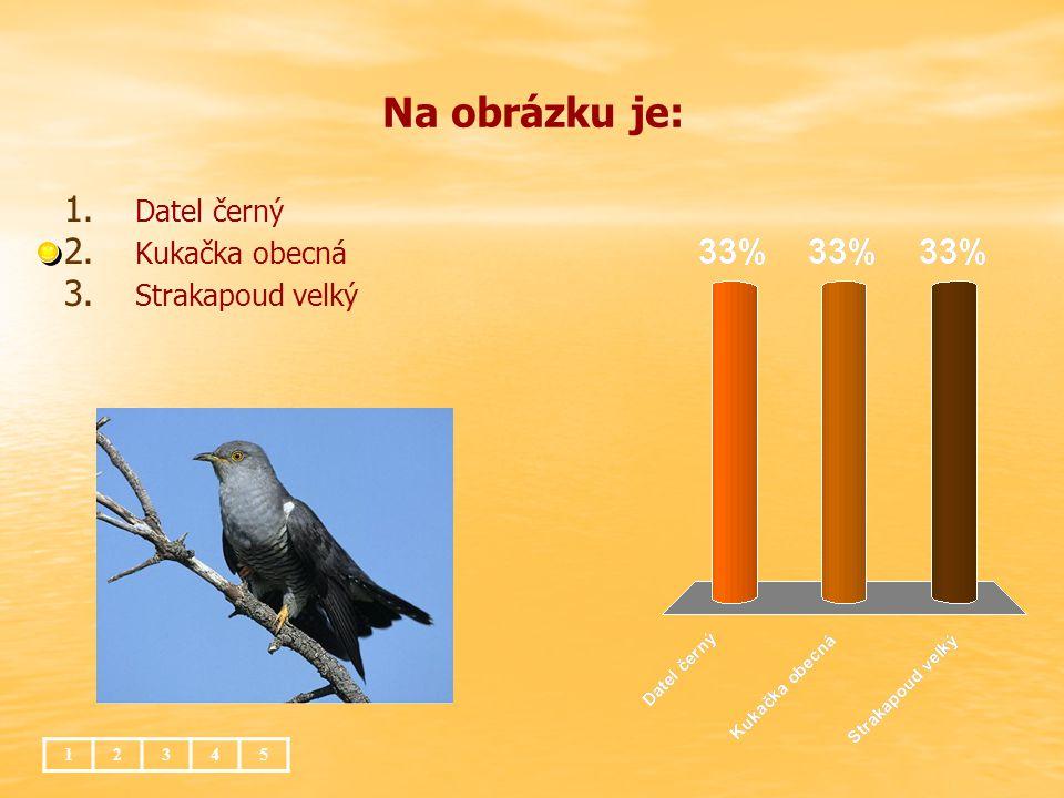 Zmije obecná 1.1. živí se drobnými savci, ptáky, obojživelníky a hmyzem 2.
