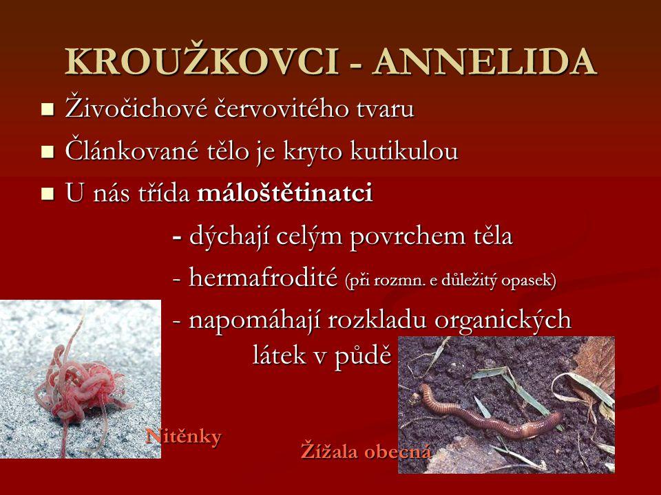 KROUŽKOVCI - ANNELIDA Živočichové červovitého tvaru Živočichové červovitého tvaru Článkované tělo je kryto kutikulou Článkované tělo je kryto kutikulo