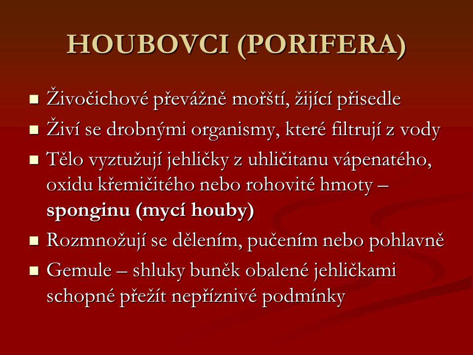 HOUBOVCI (PORIFERA) Živočichové převážně mořští, žijící přisedle Živočichové převážně mořští, žijící přisedle Živí se drobnými organismy, které filtru