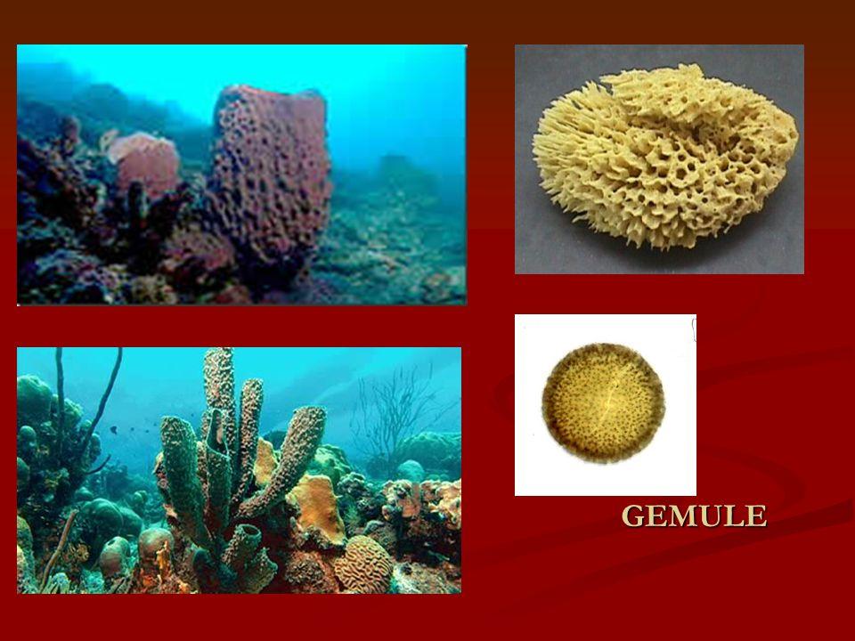 ŽAHAVCI (CNIDARIA) Vodní, převážně mořské organismy.