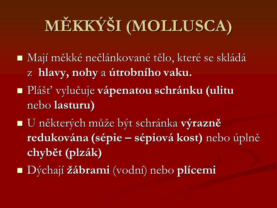MĚKKÝŠI (MOLLUSCA) Mají měkké nečlánkované tělo, které se skládá z hlavy, nohy a útrobního vaku. Mají měkké nečlánkované tělo, které se skládá z hlavy