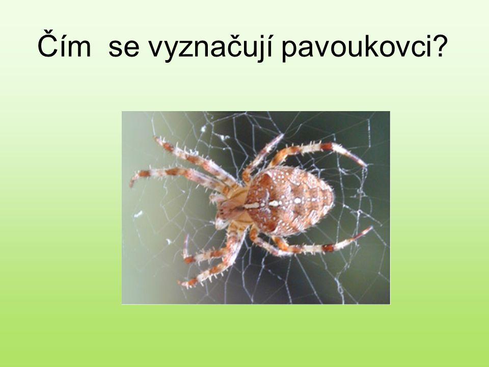 Nejdříve si zopakujeme rozdělení členovců… pavoukovcikorýšihmyz mnohonožky stonožky O kterých zástupcích jsme se již učili?