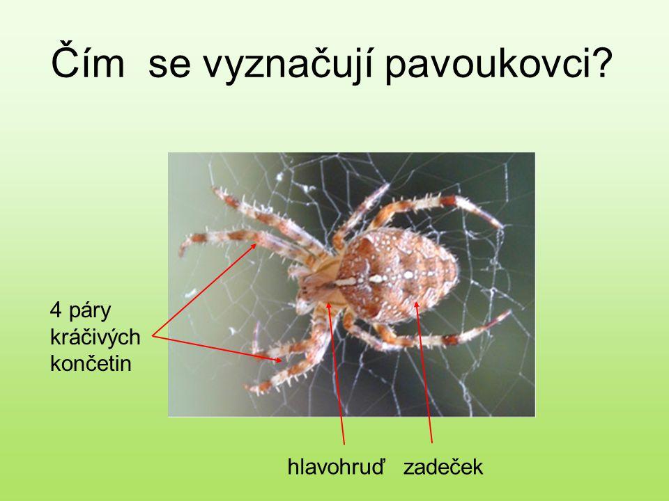 Čím se vyznačují pavoukovci?