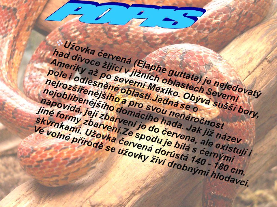 3  Užovka červená (Elaphe guttata) je nejedovatý had divoce žijící v jižních oblastech Severní Ameriky až po severní Mexiko. Obývá sušší bory, pole i