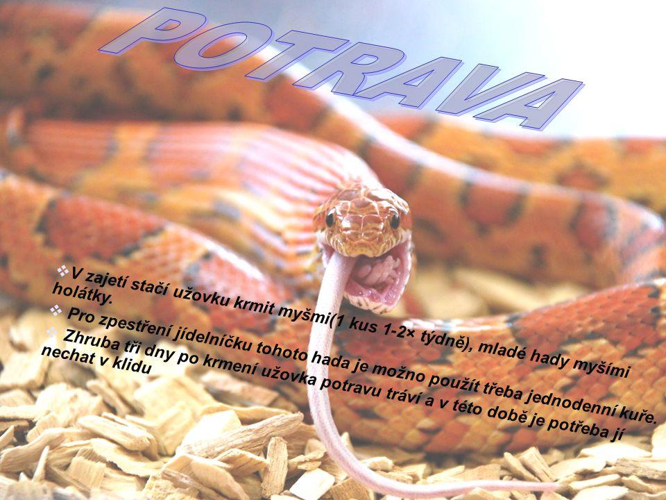 6  V zajetí stačí užovku krmit myšmi(1 kus 1-2× týdně), mladé hady myšími holátky.  Pro zpestření jídelníčku tohoto hada je možno použít třeba jedno