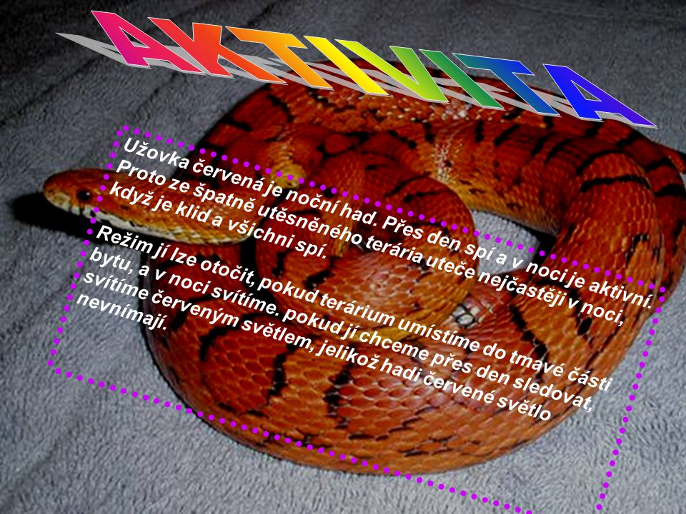 9 Užovka červená je noční had. Přes den spí a v noci je aktivní. Proto ze špatně utěsněného terária uteče nejčastěji v noci, když je klid a všichni sp