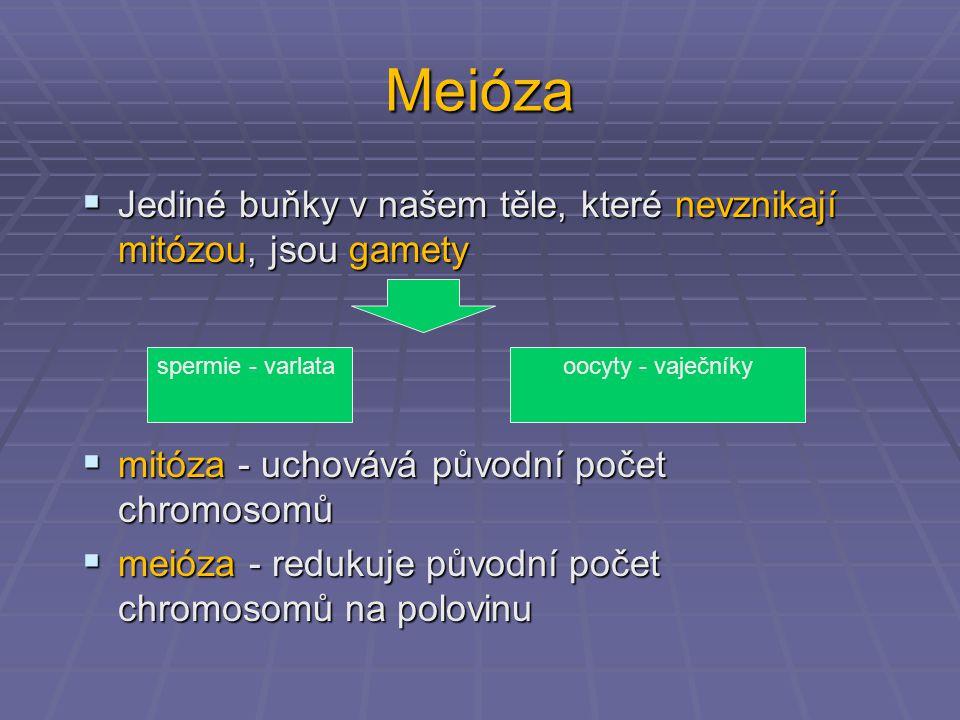Meióza  Jediné buňky v našem těle, které nevznikají mitózou, jsou gamety  mitóza - uchovává původní počet chromosomů  meióza - redukuje původní poč