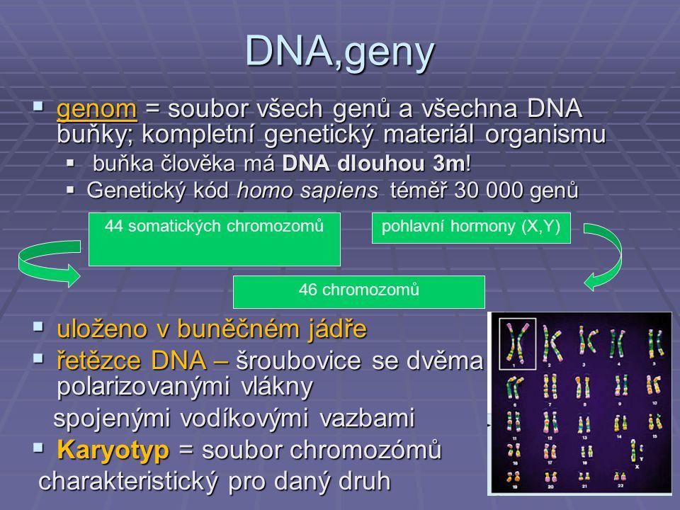 DNA,geny  genom = soubor všech genů a všechna DNA buňky; kompletní genetický materiál organismu  buňka člověka má DNA dlouhou 3m!  Genetický kód ho