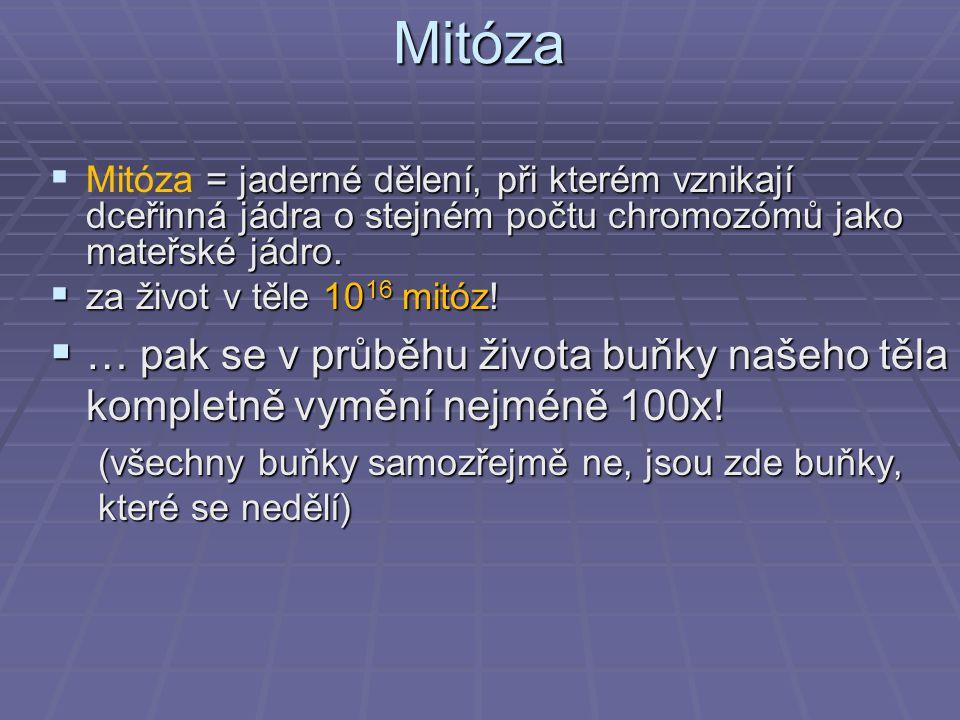 Mitóza  = jaderné dělení, při kterém vznikají dceřinná jádra o stejném počtu chromozómů jako mateřské jádro.  Mitóza = jaderné dělení, při kterém vz