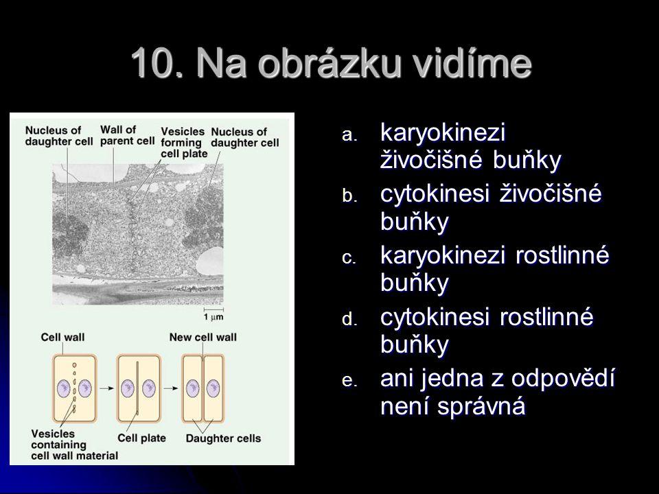 9. Dělící vřeténko se chemicky skládá z: a. intermediární filamenta b. mikrofilamenta c. mikrotubuly d. kolagen e. keratin f. celulóza